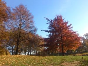 Der Herbst strahlt