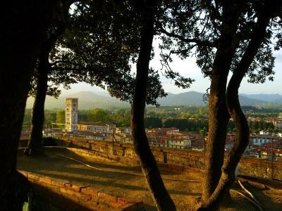 Die Bäume vom Torre Guinigi